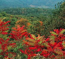 SUMAC, FOOTHILLS PARKWAY, TN. by Chuck Wickham