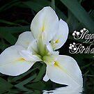 Happy Birthday! by Glenna Walker