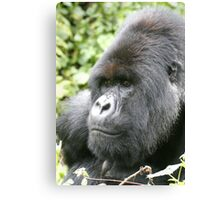 Silverback Mountain Gorilla Canvas Print