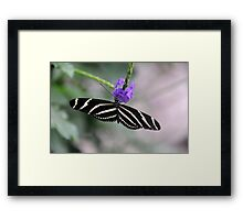 A Great Thirst Framed Print