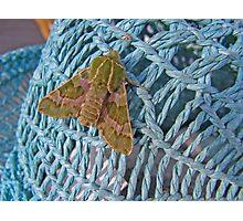 Moth on Hat Photographic Print