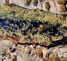 Rocks & Seaweeds II by andreisky
