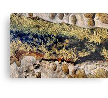 Rocks & Seaweeds II Metal Print