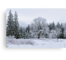 Snowy Pasture Canvas Print