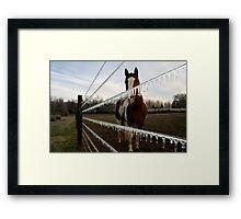 Equine Ice Framed Print