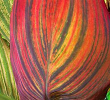A Leaf of Many Colors by Hillary Bowden