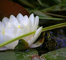Lily pad and frog by Cricket Jones