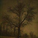 Tree Spirit by Judi Taylor