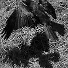 SHADOW CROW by Niiso
