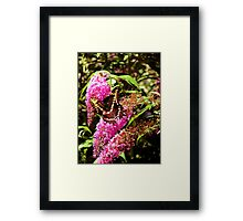 The Butterflies Framed Print