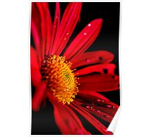 red flower Poster