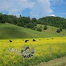 fields of gold by LoreLeft27