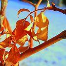 Hanging on ! by Cricket Jones