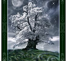 The White Leaved Oak by Angie Latham