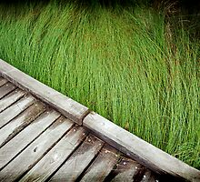 Sea of Grass by Natsky