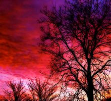 """Colourful Winter Sunrise"" by Bradley Shawn  Rabon"