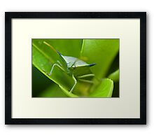 Stink Bug Framed Print