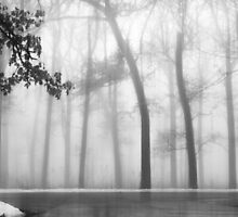 Fog Envelopes the Woods by Brian Gaynor