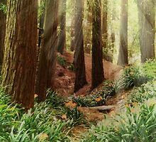 Sun Beams shining Thru the Redwood Trees by savapavo