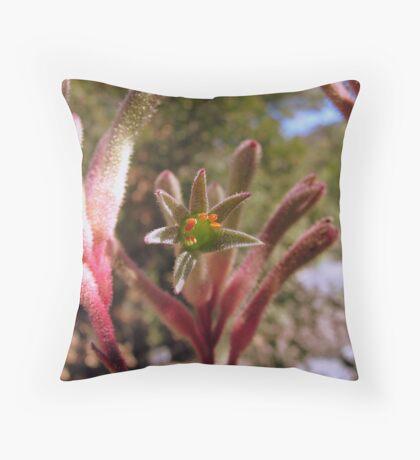 Kangaroo Paw Throw Pillow