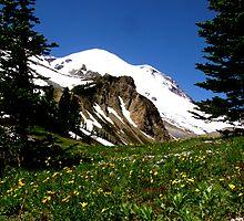 Mt. Rainier by a l