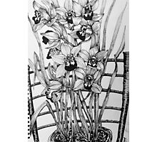 Orchids on a chair Photographic Print