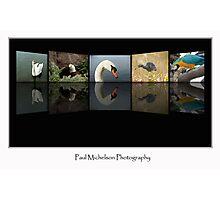 5 Birds Photographic Print