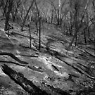 Scary Trees- Sampson Flat Bushfire 2 by Ben Loveday