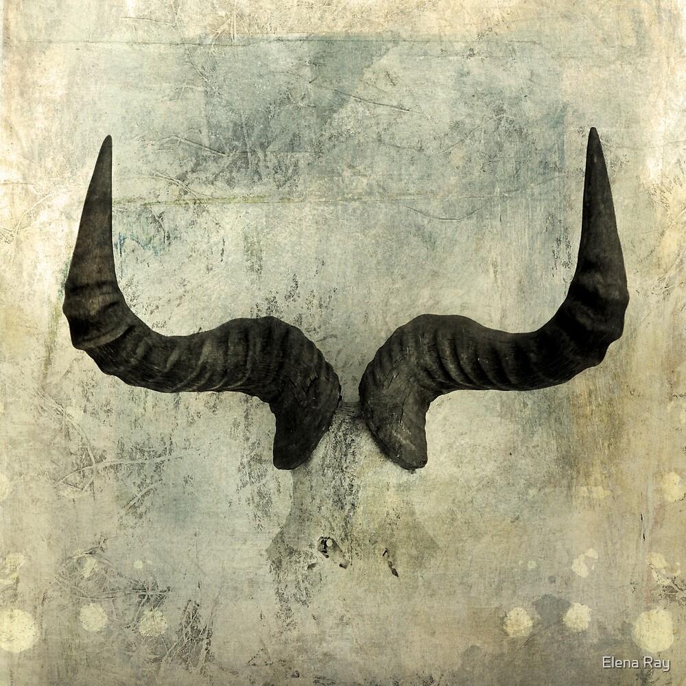 Wildebeest Horns by Elena Ray