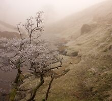 A Branch and a River by Duncan Payne