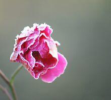 frozen flower by heartwork