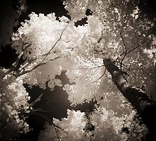 Autumn in Infrared Series , No. 1 by Max Buchheit