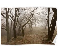 Twisted Branches Poster