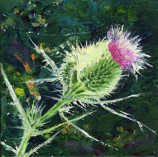 Sunlit thistle. by Maureen Whittaker
