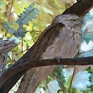 Tawny Frogmouths by Pam Wilkie