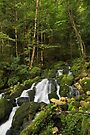 Running water in Septmoncel forest by Patrick Morand