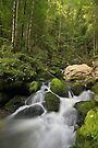 Cascading water in Jura forest by Patrick Morand