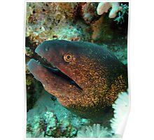 Yellowmargin Moray Eel Poster