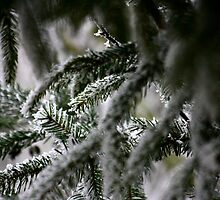 Pine Tree Branches by Pamela Jayne Smith