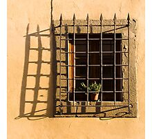 Imprisoned flower Photographic Print