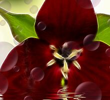 Blood Red Beauty by Deborah  Benoit
