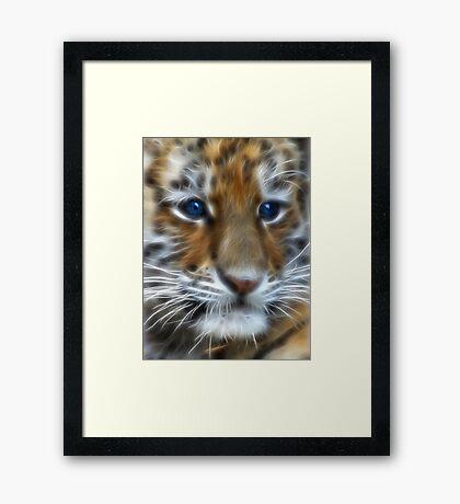 Siberian Tiger Cub Framed Print