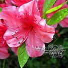 azalea blossum by LoreLeft27