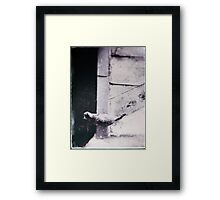 rooftop cat Framed Print