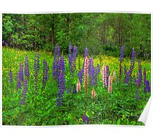 Lupine Spikes Poster