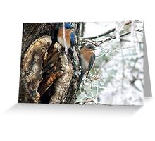 Now Do You Want To Fly South? Greeting Card