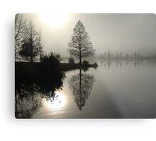 Cypress in the Fog  Metal Print