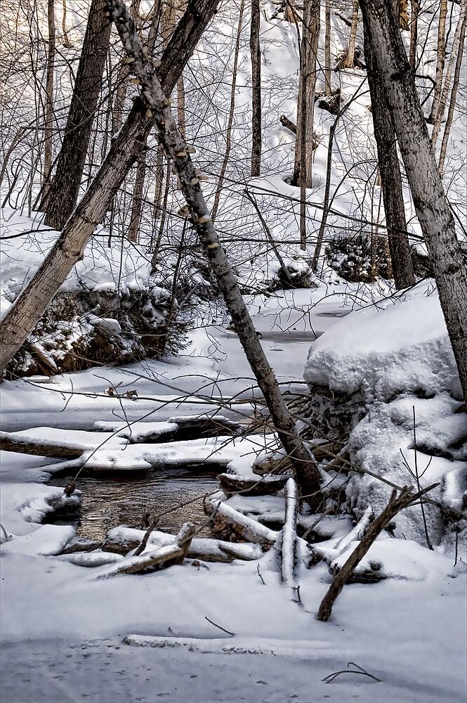 Winter  Scene by RBFoto