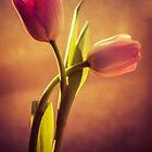 Tulip  Duet by JBlaminsky