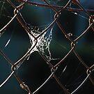 Web by Catherine Davis